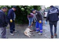 Sokak köpeği silahla vurularak katledildi