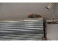 Kuş yuvası zarar görmesin diye dükkanının kepenklerini kapatmıyor