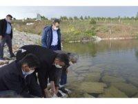 Tavşanlı ilçesinde 9 köy göletine yavru sazan balığı bırakıldı
