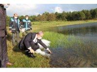 Kütahya'da 301 bin adet yavru sazan sulara bırakıldı