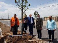 Büyükşehir'den Erzurum'a yemyeşil yatırım