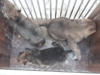 Annelerini öldürüp yavrularını sahiplenenlere ceza yağdı
