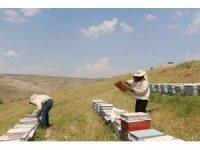 Kilosu 5 bin liraya çıkınca arıcılar propolise yöneldi