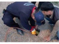 Su kuyusuna düşen yavru köpek kurtarıldı