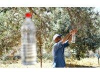 Tire'de zeytin sineğine karşı toplu mücadele protokolü