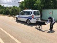 Yasak günlerinde sokak hayvanları unutulmayacak