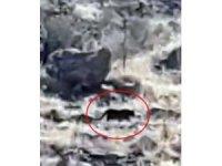 Bodrum'da jaguara benzetilen hayvan merak uyandırdı