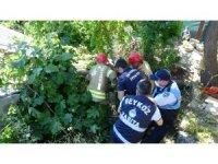 Beykoz'da yarım asırlık dutağacı binanın üzerine devrildi