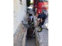 Su kanalına düşen eşek kurtarıldı