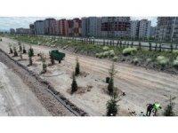 Daha yeşil Kocasinan için 15-20 yaş arası ağaçlar toprakla buluştu