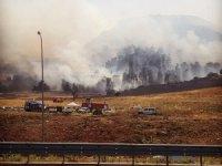İsrail'de binlerce dönümlük orman kül oldu