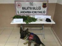 Malatya'da yasa dışı kenevir operasyonu