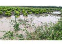 Tarım ürünleri ve tarlalar sular altında kaldı