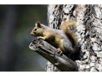 Kepez ormanlarında doğal yaşam