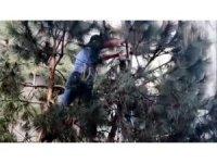 Ağaçta mahsur kalan kediyi vatandaş kurtardı