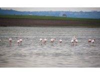 Flamingolardan Gölbaşı semalarında görsel şölen