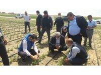 Başkan Koçak dolu nedeniyle zarar gören tarlalarda hasar tespiti yaptı