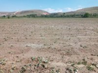 Amasya'da etkili olan dolu tarım arazilerini vurdu