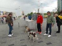Taksim'de ayağı kırılan köpek için vatandaşlar seferber oldu