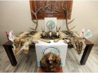 Boz ayı ve koruma altındaki karacaları kaçak avlayan şahıslara ceza yağdı