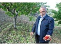 Tokat'ta dolu yağışı ekili alanları vurdu