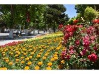 Büyükşehir Belediyesi'nden 150 bin çiçek