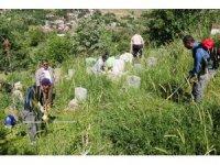 Bitlis Belediyesi mezarlıkları temizliyor