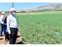 Yeşilyurt'ta tarımsal üretim ve Ar-Ge sahası kuruldu