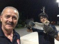 Bacaya sıkışan baykuşu itfaiye kurtardı