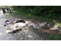 Büyük vicdansızlık: Ormanda 12 köpek ölüsü bulundu