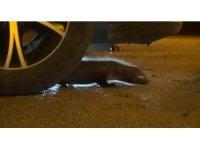 Otomobilin motor bölümüne sıkışan gelincik kurtarıldı