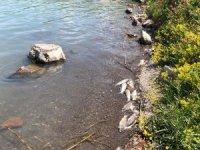Depremin ardından yaşanan balık ölümleri vatandaşları tedirgin ediyor