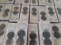 Tırda çay paketleri içinde esrarengiz anaç ve işçi arılar