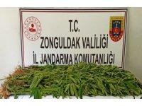 Jandarmanın 31 operasyonunda 8 şüpheli tutuklandı