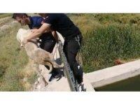 Kanal kenarında mahsur kalan köpeği itfaiye kurtardı