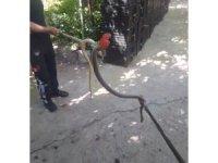 Amasya'da depodan çıkan yılan doğaya salındı