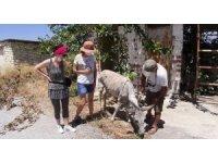 Başıboş bırakılan eşeği, hayvanseverin dikkati kurtardı