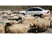 Koyun sürüsü karayolu kapattı