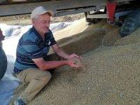 Manyas'ta buğday verimi çiftçinin yüzünü güldürdü