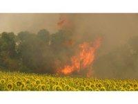 Çanakkale'deki poyraz orman yangınına müdahaleyi güçleştiriyor...Kumköy de boşaltılıyor