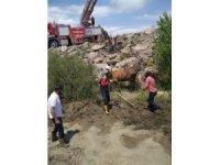 Bataklığa saplanan ineği itfaiye ekipleri kurtardı