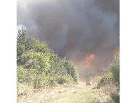 Korkutan orman yangını hakkında açıklama