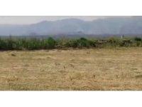 Kınalı keklik ve yavrularının biçilmiş buğday tarlasında beslendiği anlar görüntülendi