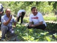 """Aksaray Valisi Aydoğdu: """"Aksaray'da çilek üretimini arttıracağız"""""""
