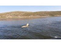 Gölete düşen kuzunun imdadına AFAD ekipleri yetişti