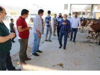 Başkan Akkaya'dan hayvan pazarına ziyaret