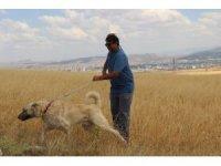 İnterpol Başkanı tatilinde Kangalları unutmadı