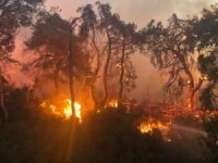 Manisa'daki orman yangını tek noktada devam ediyor