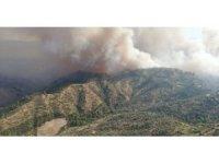 Yangında 140 hektar zirai alan zarar gördü