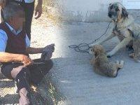 Kocaeli'nde yaşandı! Yaşlı adam köpeğe tecavüz ederken yakalandı!